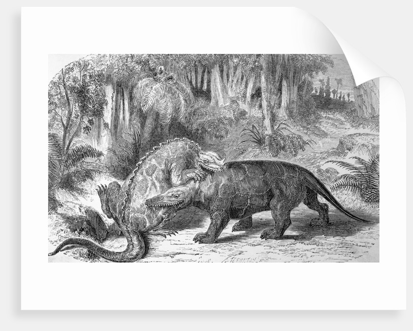 Illustration of Dinosaurs Fighting by Corbis