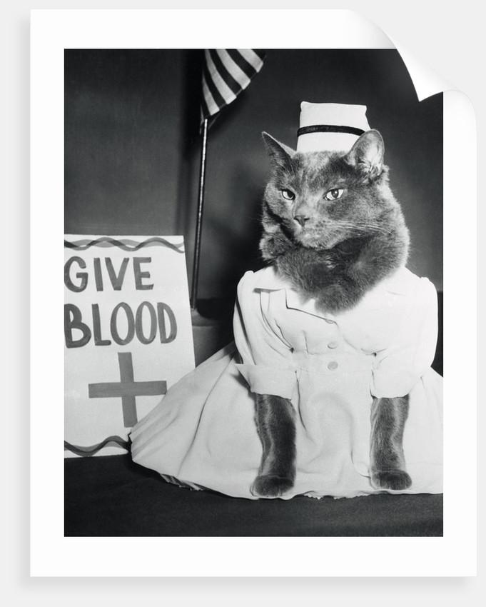 Cat Wearing Nurse Uniform by Corbis