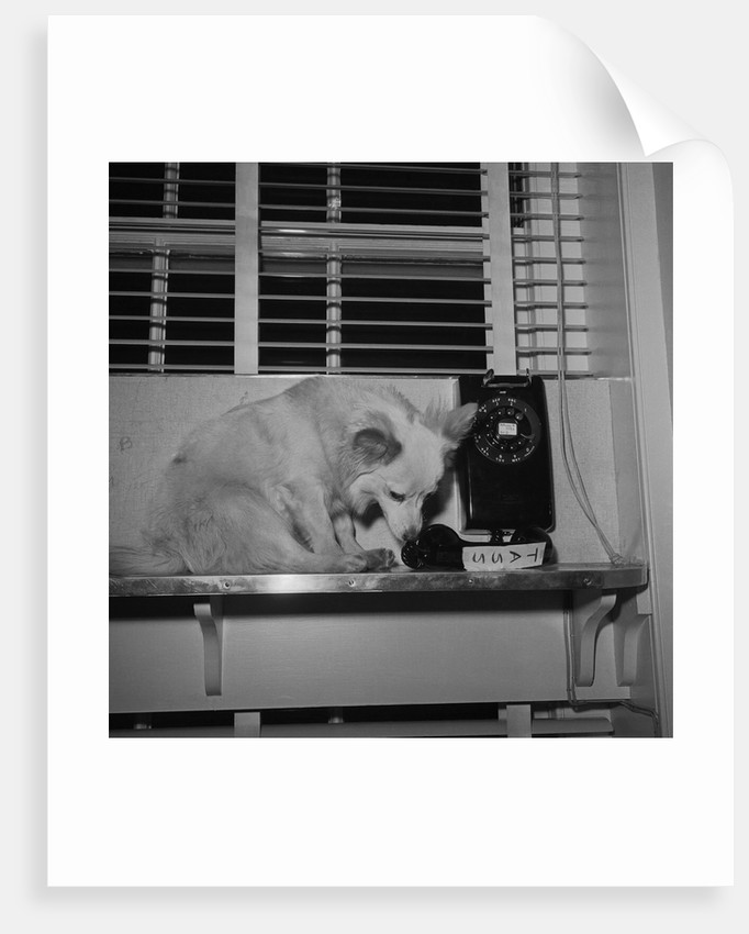 Art print POSTER CANVAS Pushinka a Pet of Caroline Kennedy