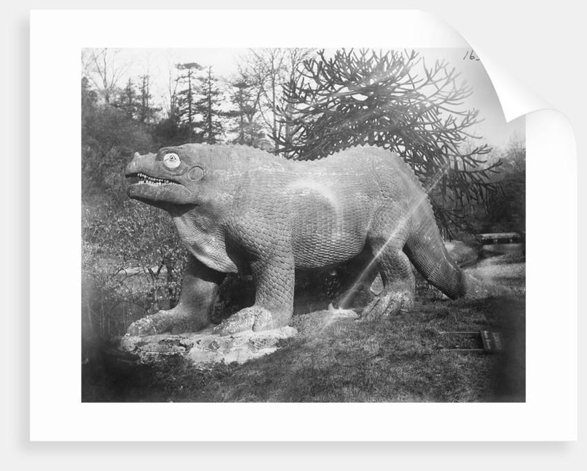 Portrait of an Iguanadon by Corbis