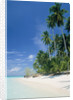 Beach with palms and clear sea, Malaysia, Mabul Island by Corbis