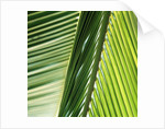 Frond by Corbis