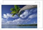 Coconut palm, One Foot Island, Aitutaki, Cook Islands by Corbis