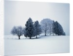 Group of trees in winter by Corbis