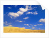 Cumulus Clouds and Wheat Fields in Fall, Washington by Corbis