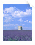 Blooming lavender and stone house in France by Corbis