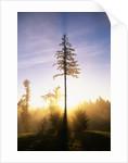 Fog at Sunrise by Corbis