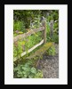 Flower Garden with Old Wood Fence by Corbis