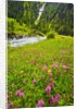 Beautiful Meadow with Stream by Corbis