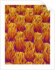 Cloth of a Brassiere Strap by Corbis