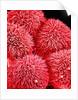 Pistil of Hibiscus Flower by Corbis