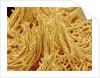 Mycelium of Mushroom by Corbis