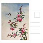 18th-Century Chinese Watercolor of Pink Flowers by Corbis