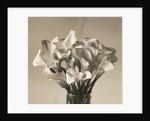 Calla Lilies in Vase by Corbis