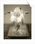 Elegant Flower in Small Vase by Corbis