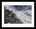 Frozen River Through Spruce Forest in Alaska by Corbis