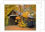 Covered Bridge and Maple Trees by Corbis