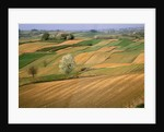 Agricultural Fields on Farm by Corbis