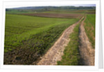 Dirt Road in Farmland by Corbis