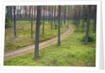 Dirt Road in Pine Forest by Corbis