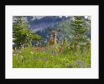 Deer in Wildflowers by Corbis