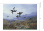 Grouse Taking Flight by Archibald Thorburn