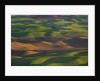 Hilly Landscape by Corbis