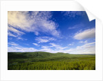 River Valley and Green Forests by Corbis