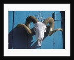 Ram Skull for Sale by Corbis