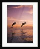 Jumping Bottlenose Dolphins by Corbis