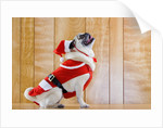 Dog in Santa Suit by Corbis
