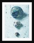 Three Seashells by Corbis