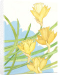 Illustration of Daffodils by Paul Cline