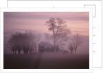 Fall Fog on Suffolk Virginia Farm by Corbis