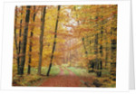Forest Road in Autumn by Corbis