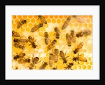 Busy Bees by Corbis