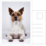 Alert Dog by Corbis