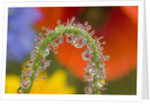 Close-up of Dew on Wildflower Stem by Corbis