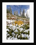 Snowy Hill at Mount Rainier National Park by Corbis