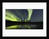 Horses under the Aurora Borealis by Corbis