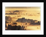 Forest Landscape at Misty Morning by Corbis