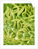 Filament of a Pieris Flower by Corbis