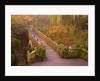 Footbridge Through the Autumn Colors by Corbis