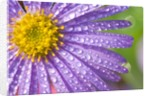 Dewdrops on Flowers by Corbis