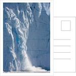 Icebergs Calving From Equip Sermia Glacier by Corbis