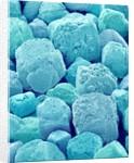 Table Salt by Corbis