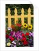 Flower Garden and Picket Fence by Corbis