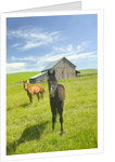 Horses and Barn in Prairie by Corbis