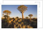 Nature on Safari by Corbis