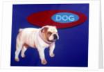 Bulldog by Corbis